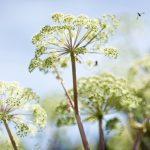 Flowers © Christian Doyle Photography